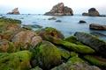Картинка rocks, shore, Sea, moss, algae