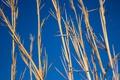Картинка небо, макро, фон, растение