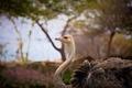 Картинка птица, профиль, страус, шея, зоопарк