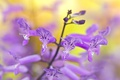 Картинка растение, лепестки, стебель, экзотика