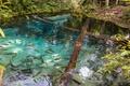 Картинка trees, fish, pond, clear water