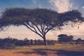 Картинка трава, ветки, люди, дерево, акация