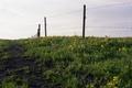 Картинка поле, небо, трава, цветы, забор, сельская местность