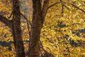 Картинка ствол, дерево, листья, осень