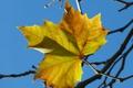 Картинка осень, небо, ветки, лист
