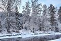 Картинка зима, лес, снег, деревья, речка