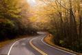 Картинка дорога, осень, лес, листья, солнце, деревья