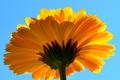 Картинка цветок, небо, природа, лепестки