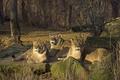 Картинка камни, трио, кошки, отдых, солнце, львицы