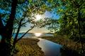 Картинка лето, вода, солнце, лучи, деревья, ветки, берег