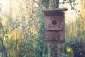 Картинка лес, гнездо, солнечный свет