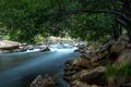 Картинка лес, деревья, ветки, река, камни, течение, листва