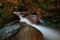 Картинка лес, листья, ручей, камни, поток