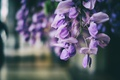 Картинка цветок, лепестки, сиреневые
