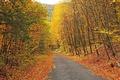 Картинка дорога, осень, лес, небо, листья, деревья