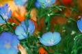 Картинка природа, растение, лепестки, сад, клумба