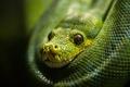 Картинка макро, фон, green snake