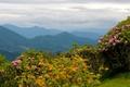 Картинка пейзаж, цветы, горы, природа, США, North Carolina, Rhododendrons