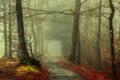 Картинка осень, лес, листья, деревья, туман, путь