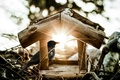 Картинка солнце, лучи, домик, птичка