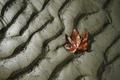 Картинка земля, лист, мокрая
