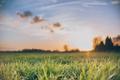 Картинка небо, трава, облака, закат, зеленая