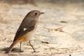 Картинка земля, птица, коричневая, оперение