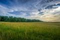 Картинка поле, небо, трава, облака, деревья, сумерки, сельская местность
