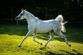 Картинка серый, конь, лошадь, бег, рысь