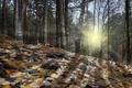 Картинка свет, осень, лес, природа