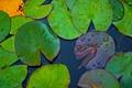 Картинка листья, капли, макро, водоем