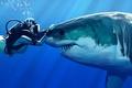 Картинка вода, Девушка, акула, прикосновение