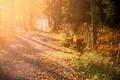 Картинка осень, свет, утро