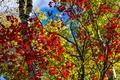 Картинка осень, лес, небо, листья, деревья, Мичиган, США