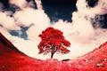 Картинка небо, трава, облака, дерево, краски, фильтр