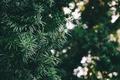 Картинка листья, зеленый, дерево, боке