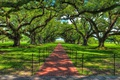 Картинка тропинка, деревья, парк, hdr, дорожка