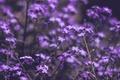 Картинка цветы, summer, flowers