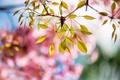 Картинка листья, природа, фон