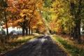 Картинка дорога, осень, листья, деревья, листва, дома, сельская местность