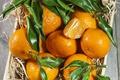 Картинка корзинка, цитрусы, листики, мандарины
