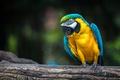 Картинка природа, птица, попугай