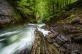 Картинка лес, деревья, река, камни, скалы, поток