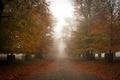 Картинка осень, город, туман, улица