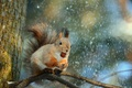 Картинка зима, снег, природа, дерево, животное, ветка, орех