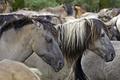 Картинка профиль, лошадь, конь