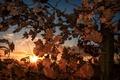 Картинка листья, дерево, утро