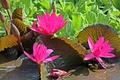 Картинка листья, цветы, лепестки, водоем