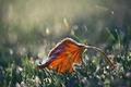 Картинка лист, осень, природа