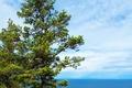 Картинка море, небо, дерево, берег, горизонт